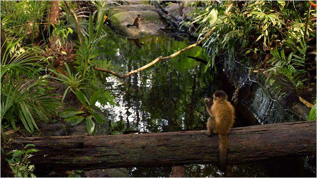 Amazonia 3D Bluray